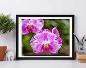 Orchid, Orchid Photo, Orchid Print, Pink Orchid, Digital Photo, Digital Download, Flower Photo, Pink, Orchid Photography