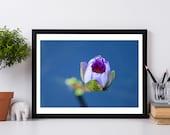 Water Lily Art, Waterlily Print, Water Lily Photo, Prints, Large Wall Art, Fine Art Photography, Large Art, flower photo