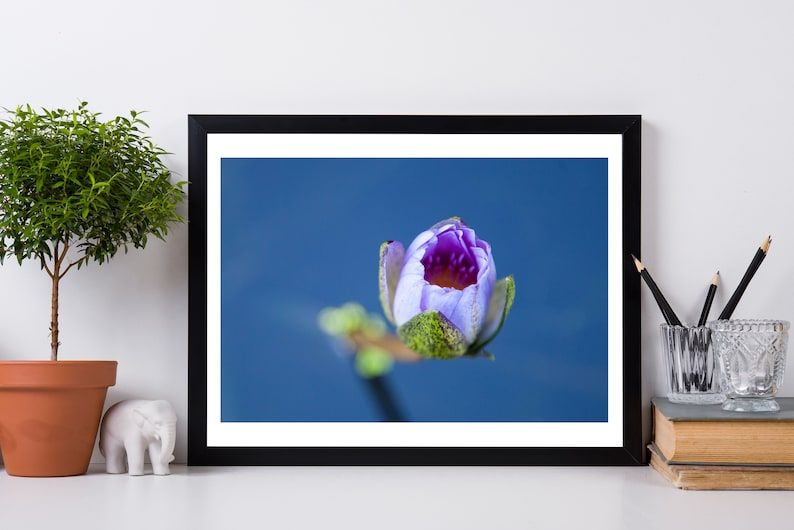 Water Lily Art Waterlily Print Water Lily Photo Prints image 0