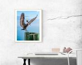 Pelican Photography, Bird Photography, Nature Photography, Bird Art Print, Gift for Her, Fine Art Photography, Bird Print Wall Art
