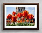 Tulip, Flower Photography, Tulip Photo, Tulip Wall Art, Tulip Photography, Floral Photography, Floral Photo Art, Tulip Photo Art, Paris,