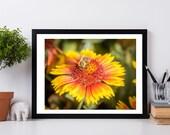 Bumble Bee on a Sun Flower, Nature Photography, White Wall Art, Minimalist Wall Decor, Nature Wall Art Decor