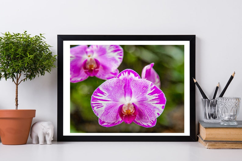 Orchid Orchid Photo Orchid Print Pink Orchid Digital image 0