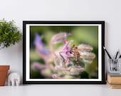 Bee Photo, Bee Print, Bee photograph, Fine Art Print, Nature Photography, Nature Home Decor, Botanic , Purple Flowers