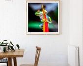 Red Eye Tree Frogm Fine Art Photo Print, Costa Rica,  Nature, Wildlife Photography