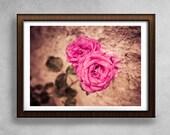 Colorful Rose Photograph, Flower Photography, canvas wall art canvas art, Paris photography prints, travel photography, room decor