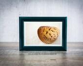 Sea Shell Wall Art, Beach Wall Art,  Shell Beach Print, Florida Photography Print, Living Room Wall Art