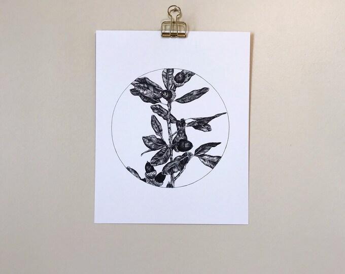 Live Oak Drawing - Art Print