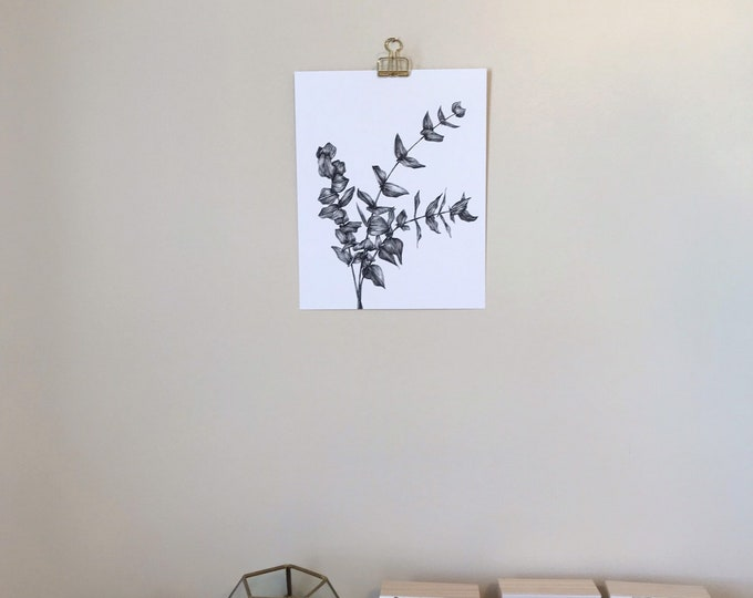 Eucalyptus Drawing - Botanical Art - Ink Illustration - Art Print