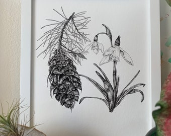 Fir and Snowdrop Illustration - Fine Art Print