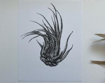 Tillandsia - Art Print