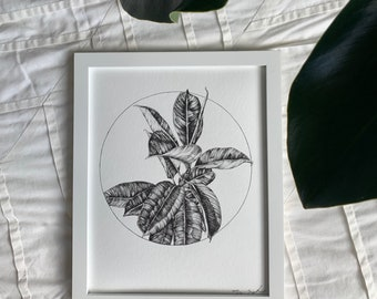 Rubber Tree Illustration - Fine Art Print