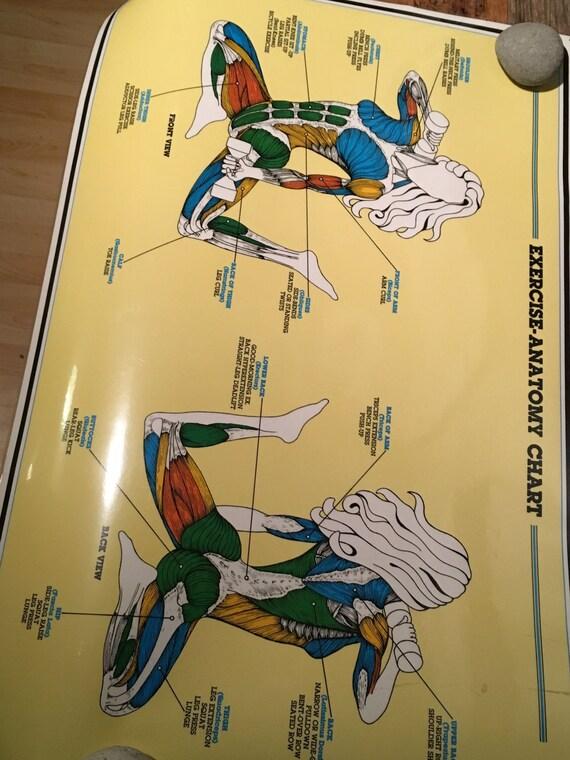 Large Laminated Exercise Anatomy Body Poster 1984 Etsy
