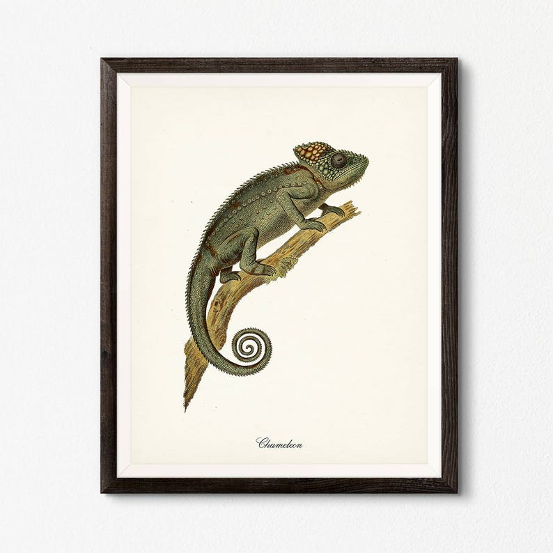 picture relating to Chameleon Printable named Chameleon Printable, Classic Cameleon Print, Antique Ebook Plate, Lizard Printable, Reptile Wall Artwork, Natural and organic Heritage Antique Instance