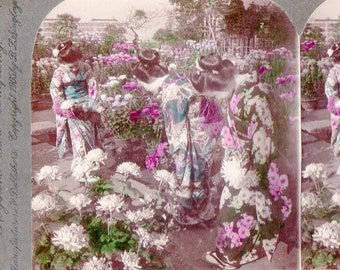 1905 Japan Women in Garden on Emperor's Birthday Colored Stereoview Photo