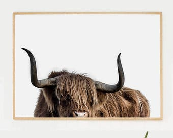 Highland cattle photography. Bull picture. Cow poster print. Printable photography. Nature picture. Cattle poster.