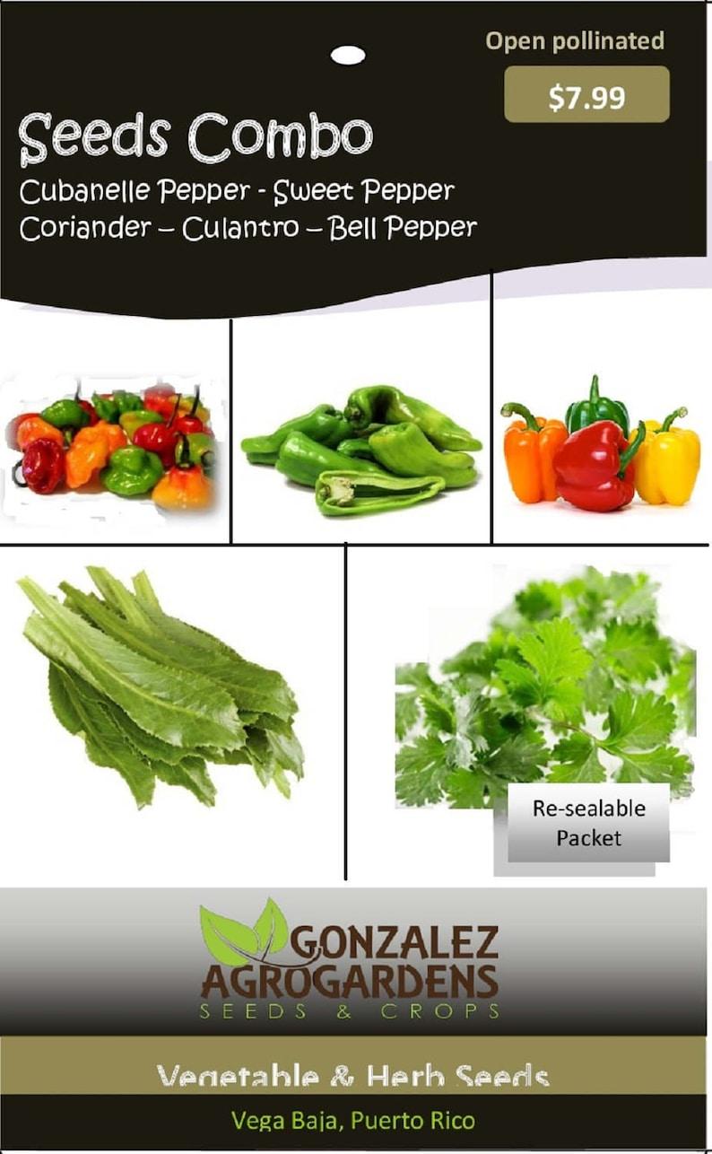 Seeds 5 Varieties: Culantro, Coriander, Cubanelle pepper, Bell pepper &  Puerto Rican sweet pepper