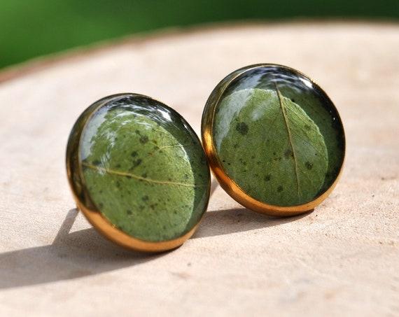 Golden Wattle Green Leaf Stud Earrings