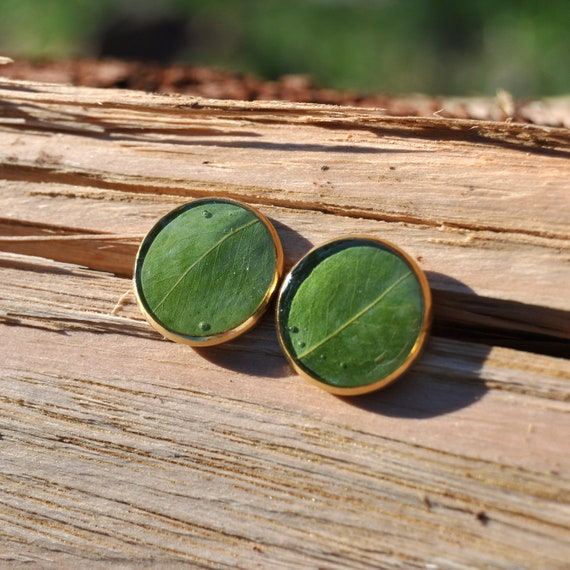 Golden Wattle Green Leaf Stud Earrings