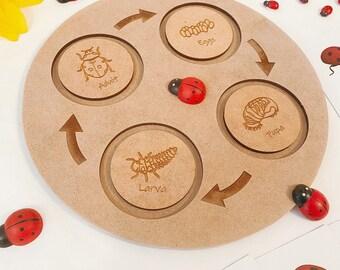 Ladybug | Ladybird LIFE Cycle Set | Wooden Display | Board, Discs