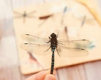 Amazing Dragonflies | 10 pieces