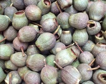 Gumnuts 500g