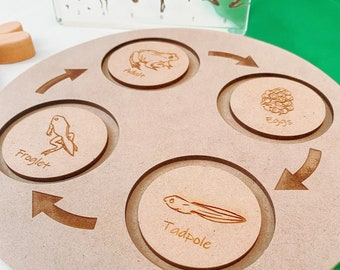 Frog Life Cycle Set | Wooden Display | Board, Discs