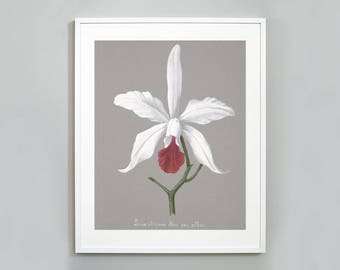 Orchid Botanical Art Print, Watercolor Painting, Museum quality, Wall Art, Floral Print, Cattleya × Elegans Hybrid Orchid
