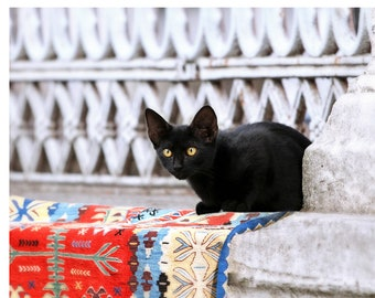 Istanbul, Turkey, travel photography, black kitten, Turkish carpet, fine art photography, for cat lovers, 16x24 print, cat art print