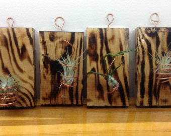Wall Decor Air Plant 4 pcs collection- all from reclaimed material