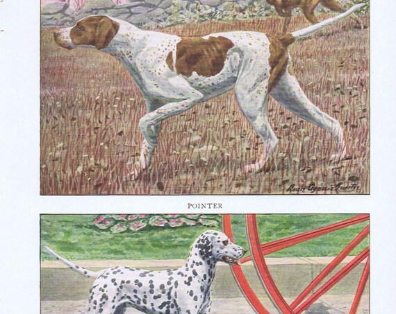 Old Dog Drawings of Pointer and Dalmatian Breeds by Louis A. Fuertes from 1919