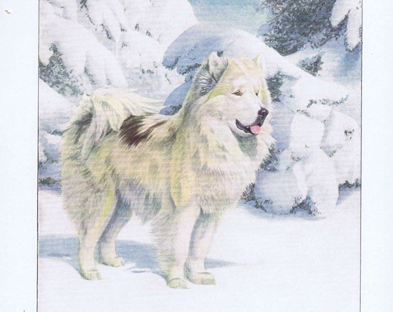 Old Drawing of North Greenland Eskimo Dog 1919 Magazine Art by Louis A. Fuertes Very Nice