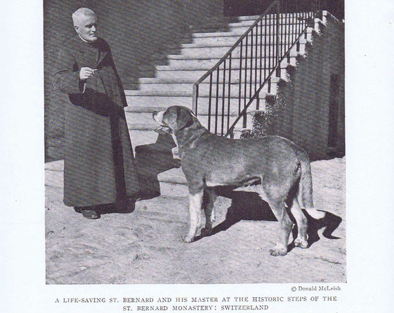"Dog Credited with Saving 40 Lives named ""Barry,"" with Master in 1919 Magazine Photo"