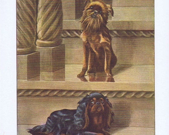 Old Dog Drawings of Brussels Griffon and King Charles Spaniel Breeds by Louis A. Fuertes from 1919