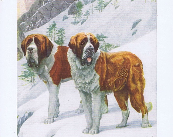 Old Drawing of 2 St. Bernard Dogs 1919 Magazine Art by Louis A. Fuertes
