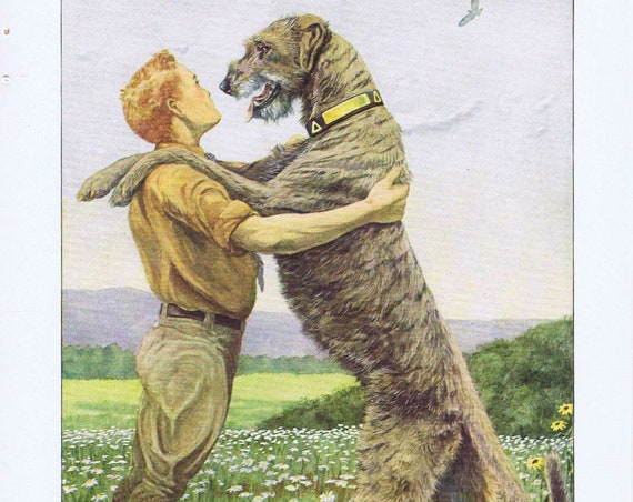 Huge Irish Wolfhound Hugging a Boy Very Neat 1919 Magazine Art by Louis A. Fuertes