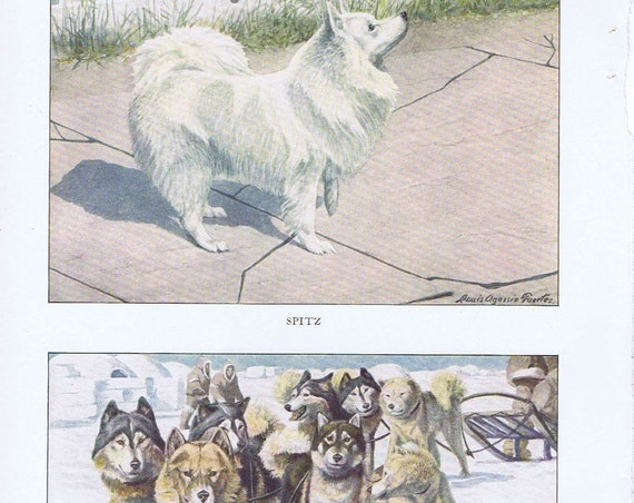 Old Dog Drawings of Spitz and Alaskan Eskimo Breeds by Louis A. Fuertes from 1919