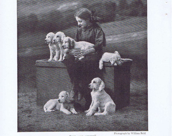 Scottish Girl and 6 Setter Puppies old 1919 Magazine Photo Would Look Great Framed