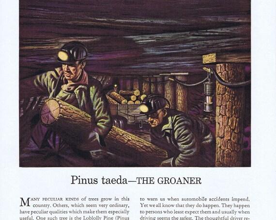 1941 Loblolly Pine Tree Travelers Insurance or Tuberculosis and Metropolitan  Original Vintage Ad