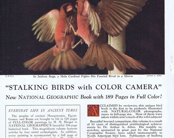 1952 Stalking Birds with Color Camera National Geographic Book or Family Fun in Ontario Original Vintage Advertisement