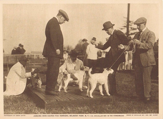 1918 Judging Wire-Haired Terriers Sepia Tone Magazine Photo with Bonus Terrier Dogs Description Page
