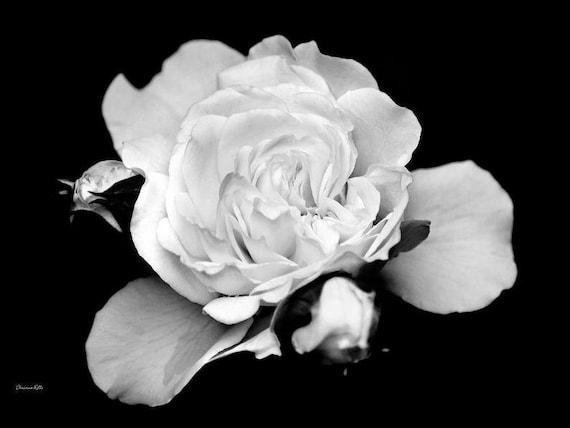 Black And White Rose Flower Print Black And White Fine Art Etsy