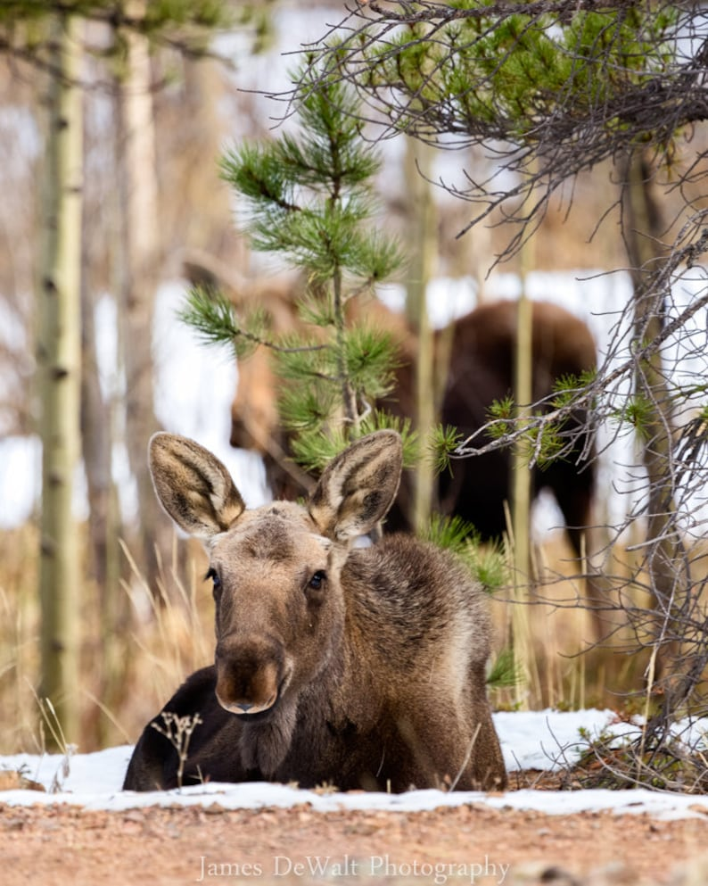 Woodland Cherub-Fine Art Photography-Wildlife image 0