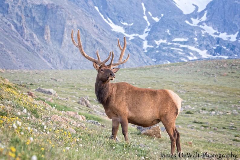 The Poser-Fine Art-Wildlife Photography-Rocky image 0