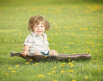 Digital backdrop, background newborn baby girl or boy toddler dandelion field outside