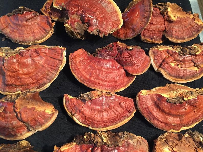 Reishi Mushroom Raw image 1