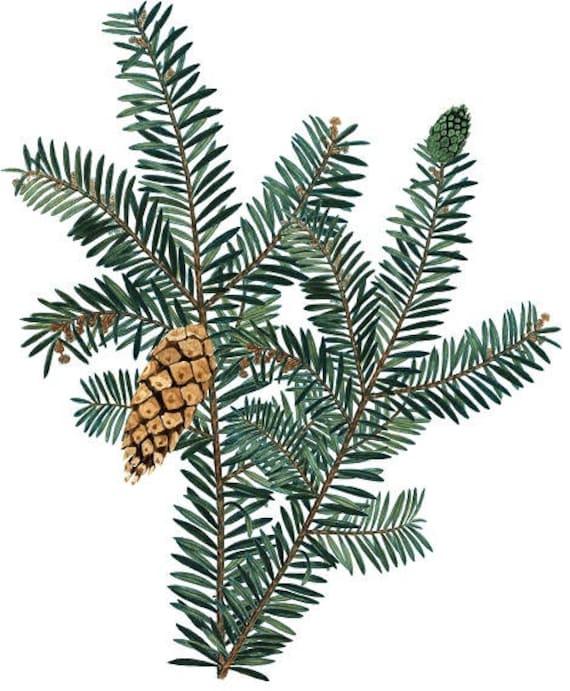 Christmas Greenery.Pine Branch Print Winter Greenery Christmas Greenery Pine Cone Printable