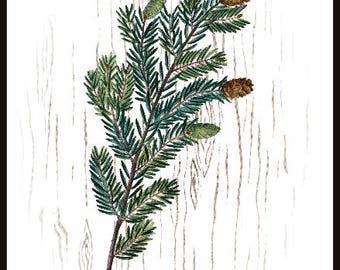 Pine Branch Printable Pine Download Pine Cone Art Winter Print Vintage Poster
