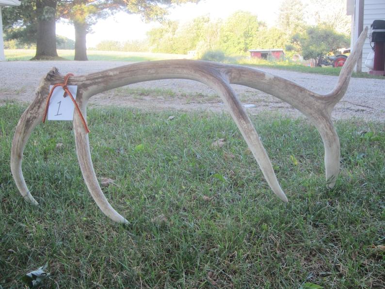 Elk Shed,natural elk antler,antler,hunting cabin,hunting decor,antler display rack,photo prop,man cave,rustic cabin decor,craft antler