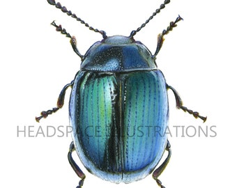 Blue Shiney Metallic Beetle Beautiful Pretty Drawing - Colored Pencil Insect Bug Art Print by Headspace Illustrations Headspaceillustrates